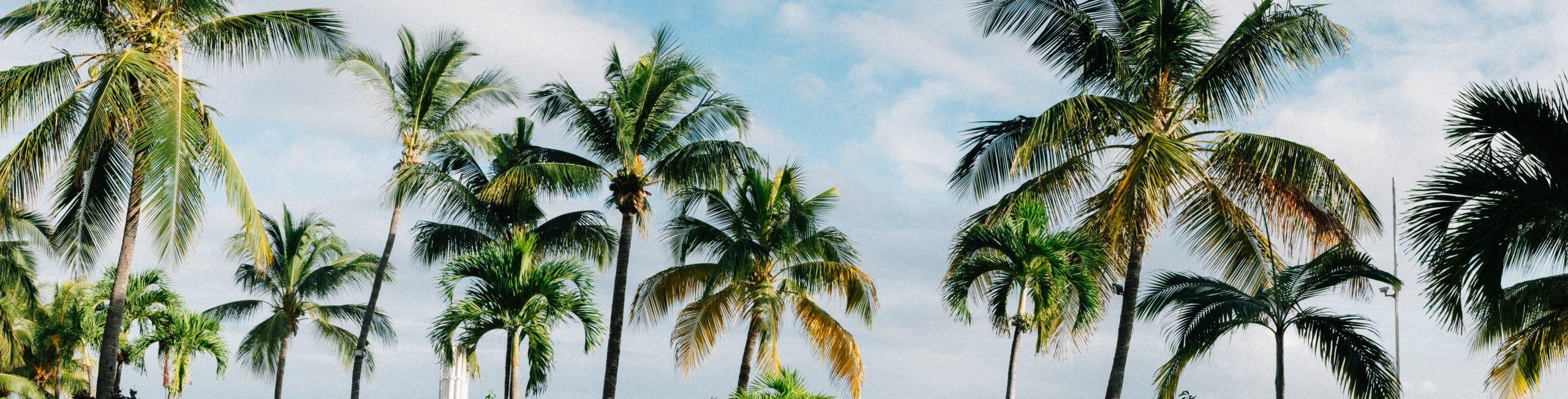 Mauritius trees